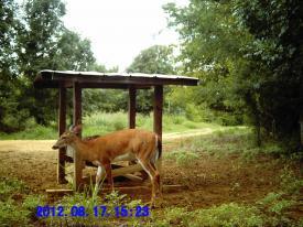 Doe (8-17-2012)