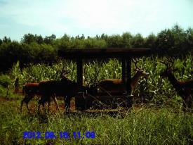 Bucks (8-16-2012)