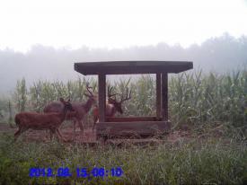 Bucks (8-15-2012)