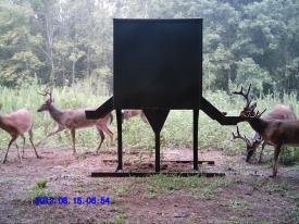 10 Point Bucks (8-15-2012)