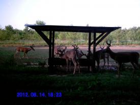 Bucks (8-14-2012)