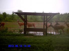 Big Bucks (8-13-2012)