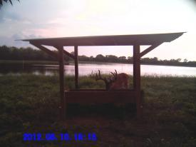 Pond Buck (8-12-2012)