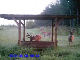 Bucks (8-8-2012)