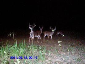 Bucks (9-15-2011)