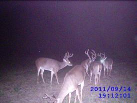 Bucks (9-14-2012)