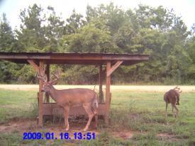 Buck (1-16-2012)