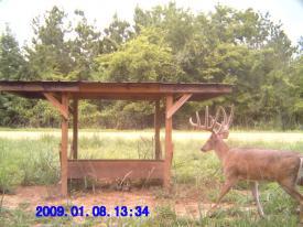 Buck (1-8-2012)