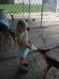 Feeding Fawns
